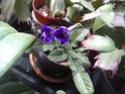 compos du printemps et clématite montana Strept10