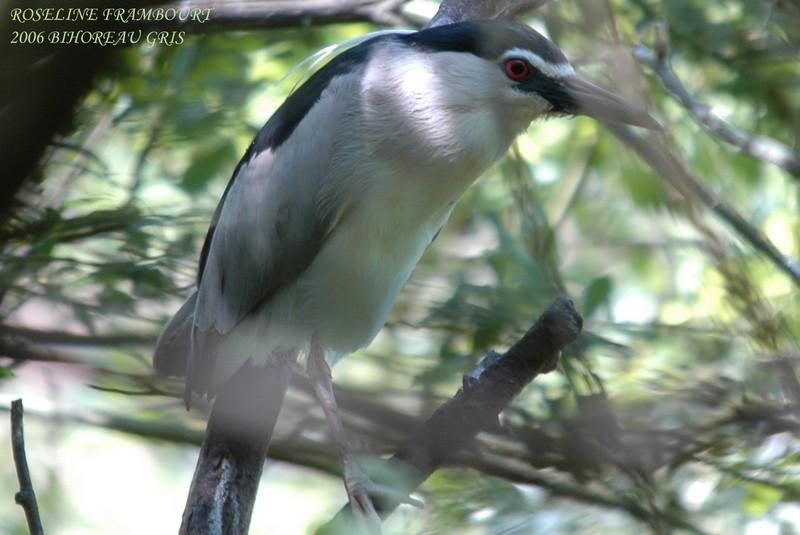 mon abc des oiseaux 16910
