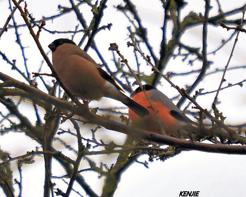 mon abc des oiseaux 188_bo10
