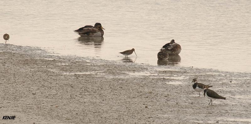 mon abc des oiseaux 191_by10