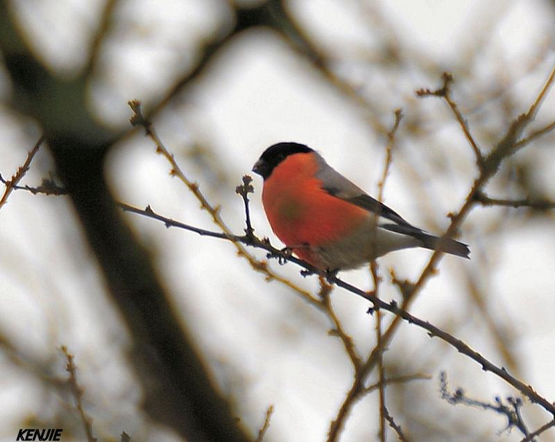 mon abc des oiseaux 193_bo10