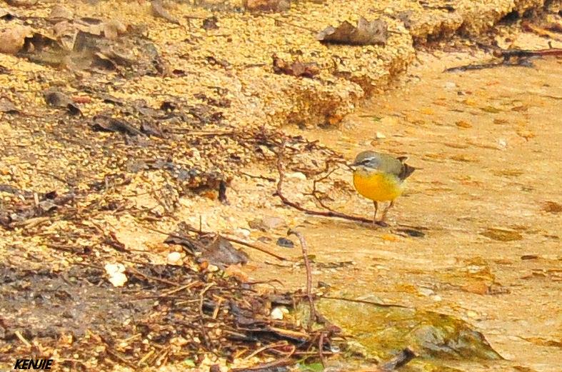 mon abc des oiseaux 216_be10