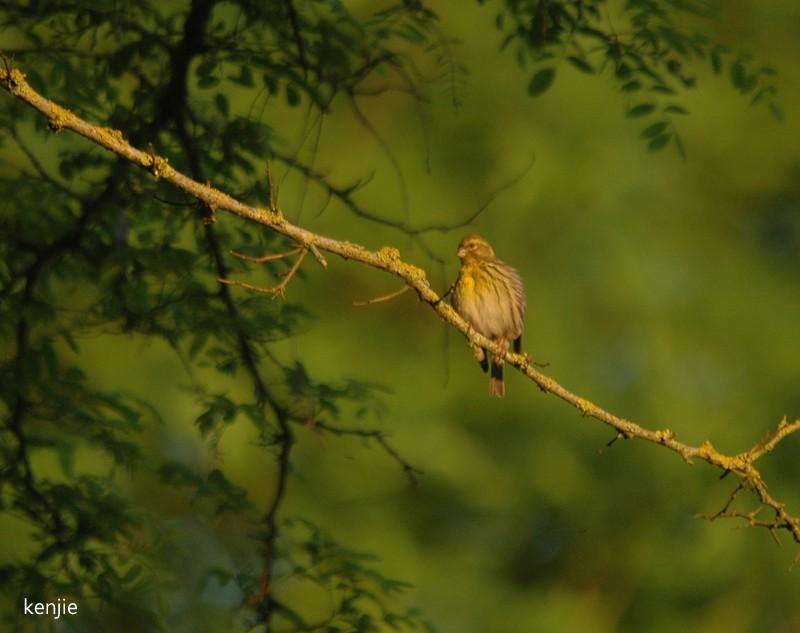 mon abc des oiseaux - Page 2 234_ca10