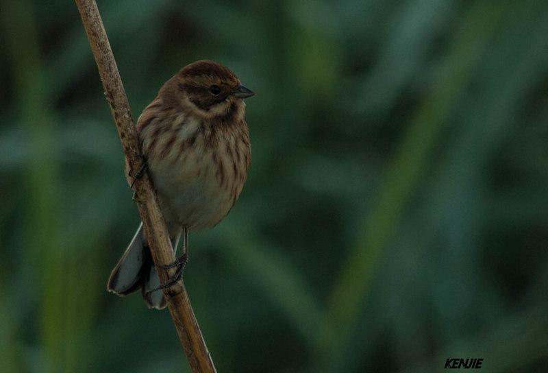 mon abc des oiseaux 260_br11