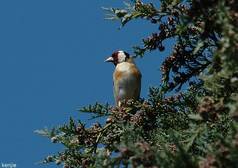 mon abc des oiseaux - Page 2 286_ch10