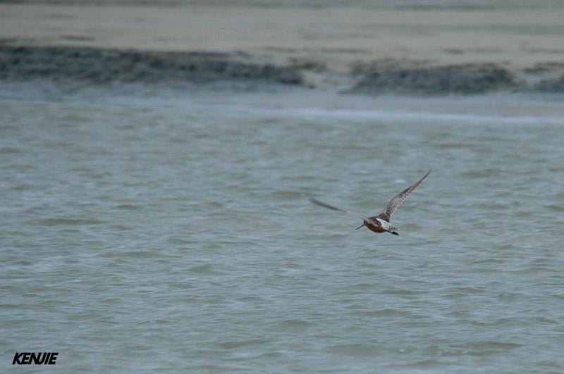 mon abc des oiseaux 318_vo10