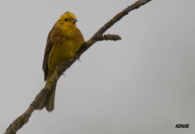 mon abc des oiseaux 86_bru10
