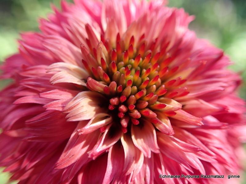 floraisons macro - Page 14 P6211012