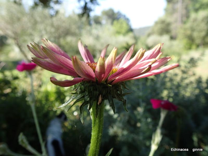 floraisons macro - Page 14 P6211014