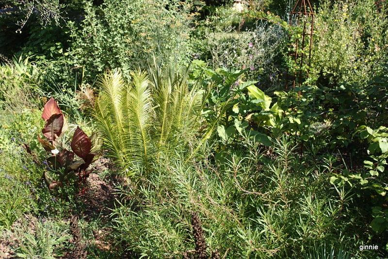 Quelques photos de mon jardin : gros projet 2013 : Evolution Mai 2014 - Page 6 P8050910