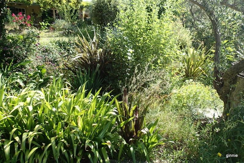 Quelques photos de mon jardin : gros projet 2013 : Evolution Mai 2014 - Page 6 P8050911
