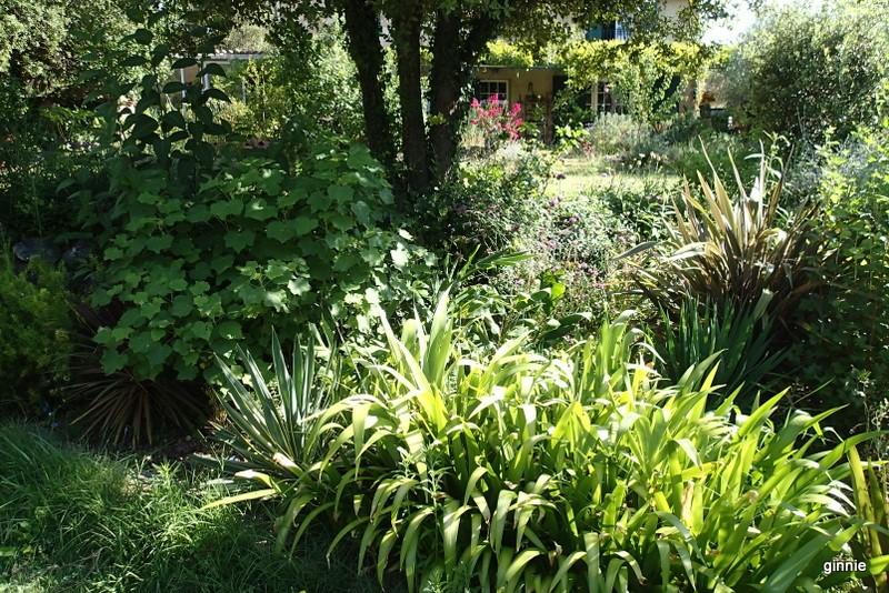 Quelques photos de mon jardin : gros projet 2013 : Evolution Mai 2014 - Page 6 P8050912