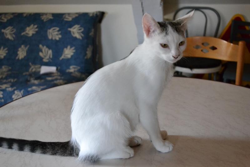 Junky, chaton mâle Dsc_6210