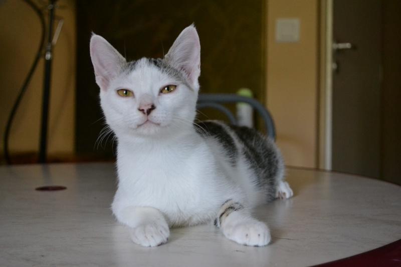 Junky, chaton mâle Dsc_6211