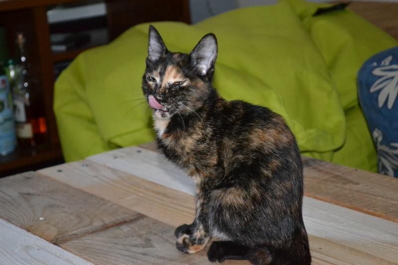 ADOPTEE Chloé chaton femelle Dsc_6214