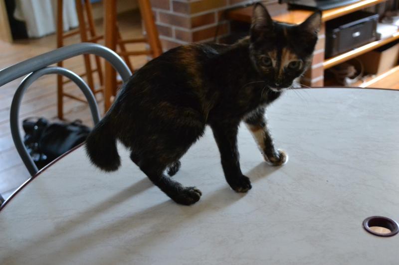 ADOPTEE Chloé chaton femelle Dsc_6217