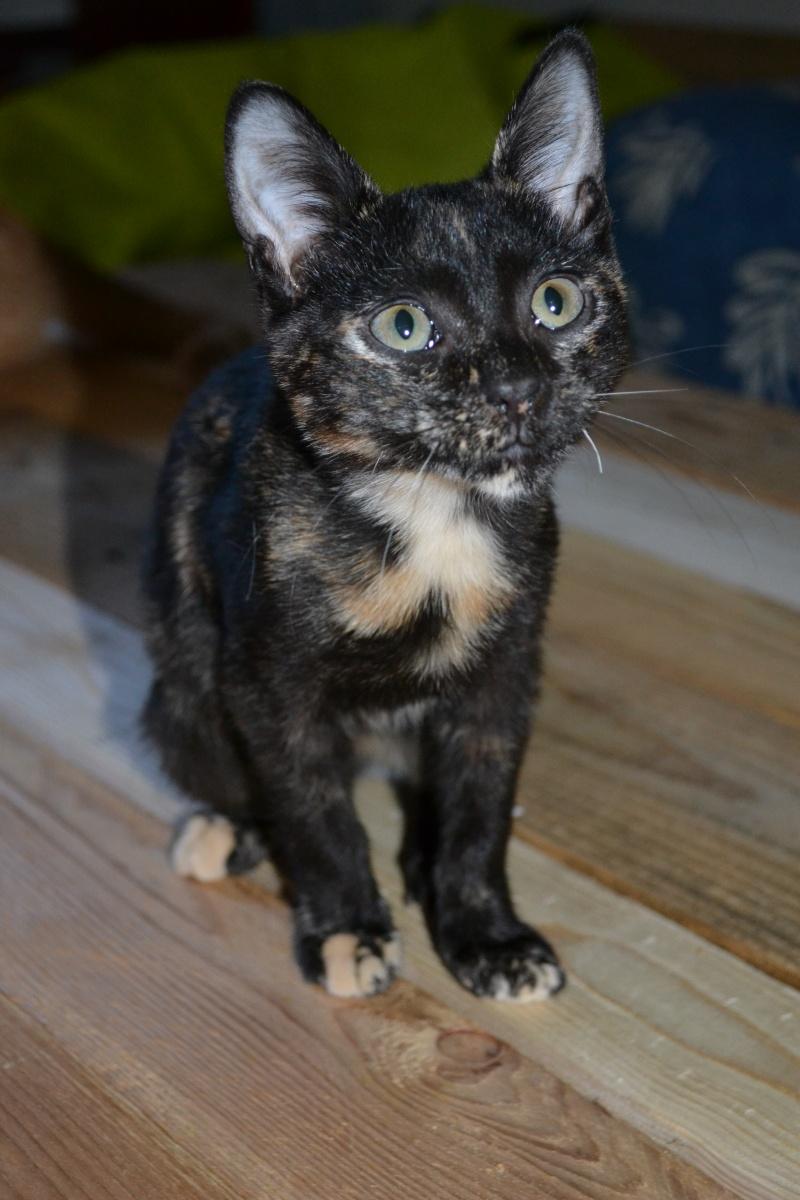 Zoé chaton femelle 6 mois Dsc_6218