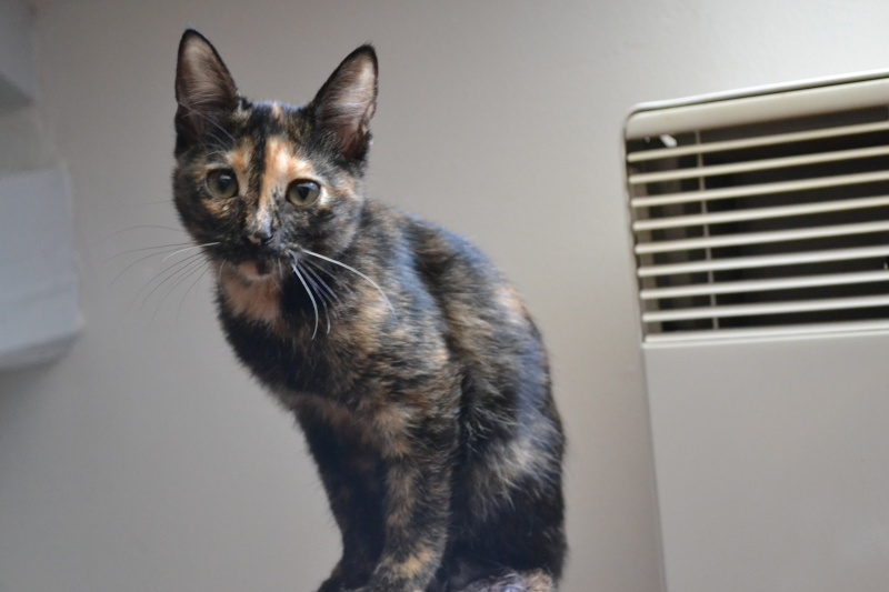 ADOPTEE Chloé chaton femelle Dsc_6314