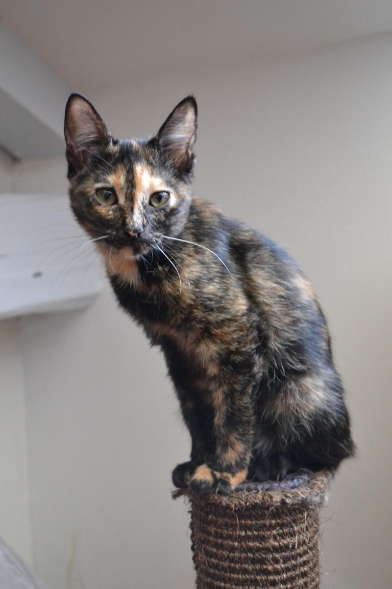ADOPTEE Chloé chaton femelle Dsc_6315