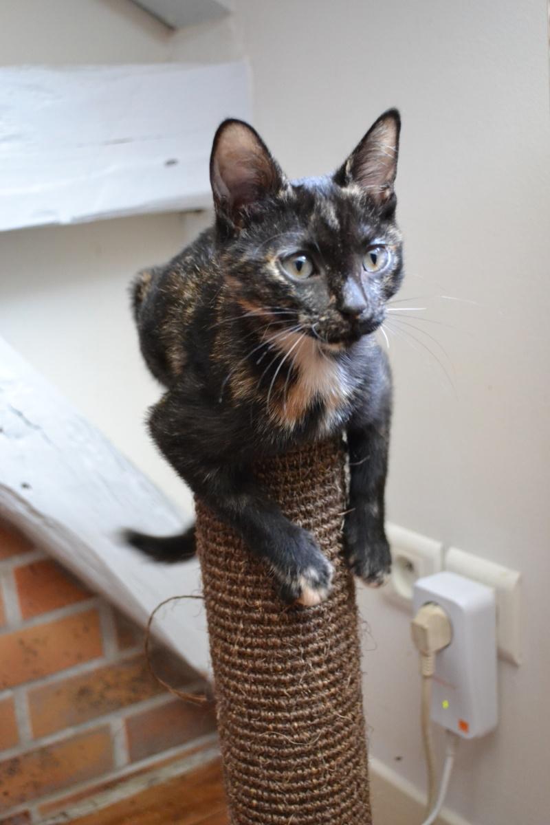 Zoé chaton femelle 6 mois Dsc_6316