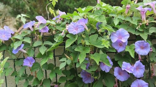 j'ai descendu dans mon jardin - Page 2 Dscn2825