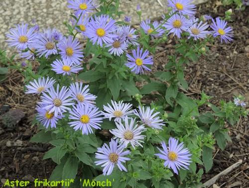 j'ai descendu dans mon jardin - Page 2 Dscn2911