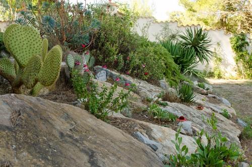 ambiances estivales au jardin - 2014 - Page 3 Jardin10