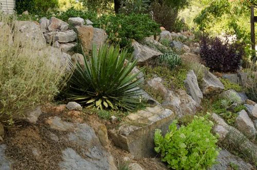 ambiances estivales au jardin - 2014 - Page 3 Jardin11