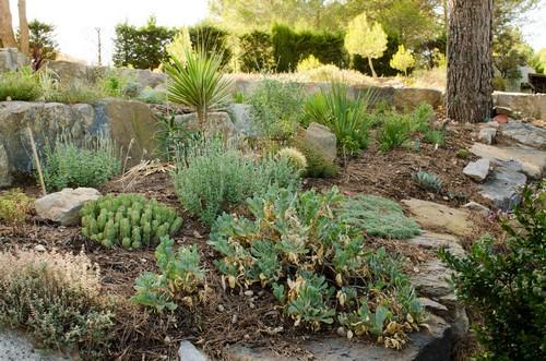 Caryopteris x clandonensis Jardin12
