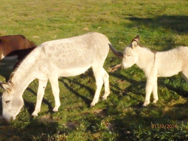 les petites oies née hier et mes autres animaux - Page 8 Pa010515