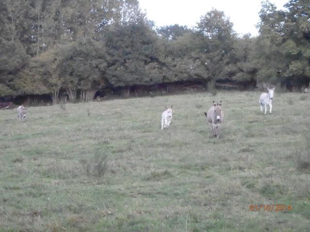 les petites oies née hier et mes autres animaux - Page 8 Pa010517