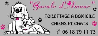 Gueule d'Amour, toilettage à domicile