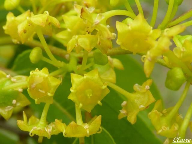Quelques photos de fleurs sauvages. Epine_10