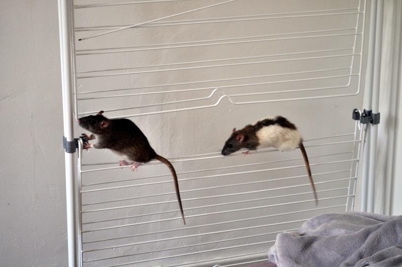 rat'clette et rat'violi  - Page 3 Dsc_0011