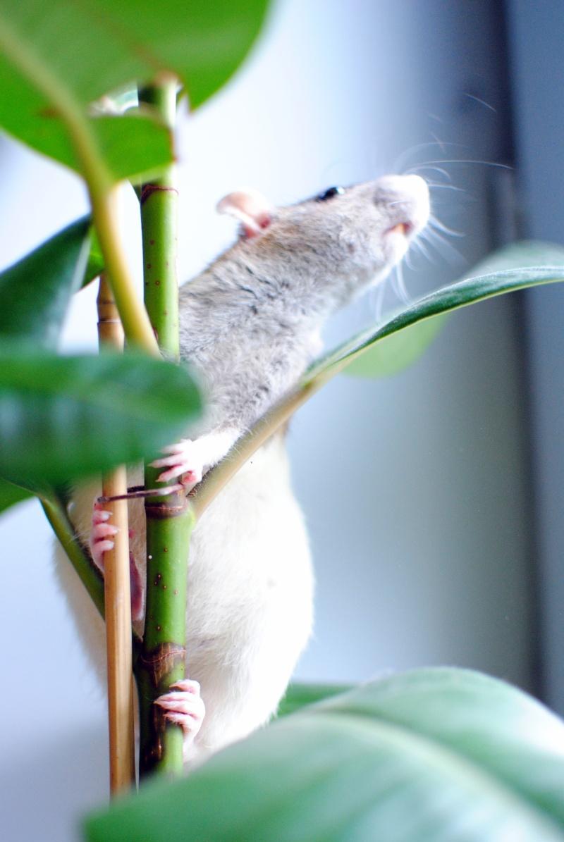 rat'clette et rat'violi  - Page 3 Dsc_0015