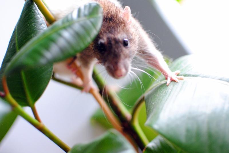 rat'clette et rat'violi  - Page 3 Dsc_0016