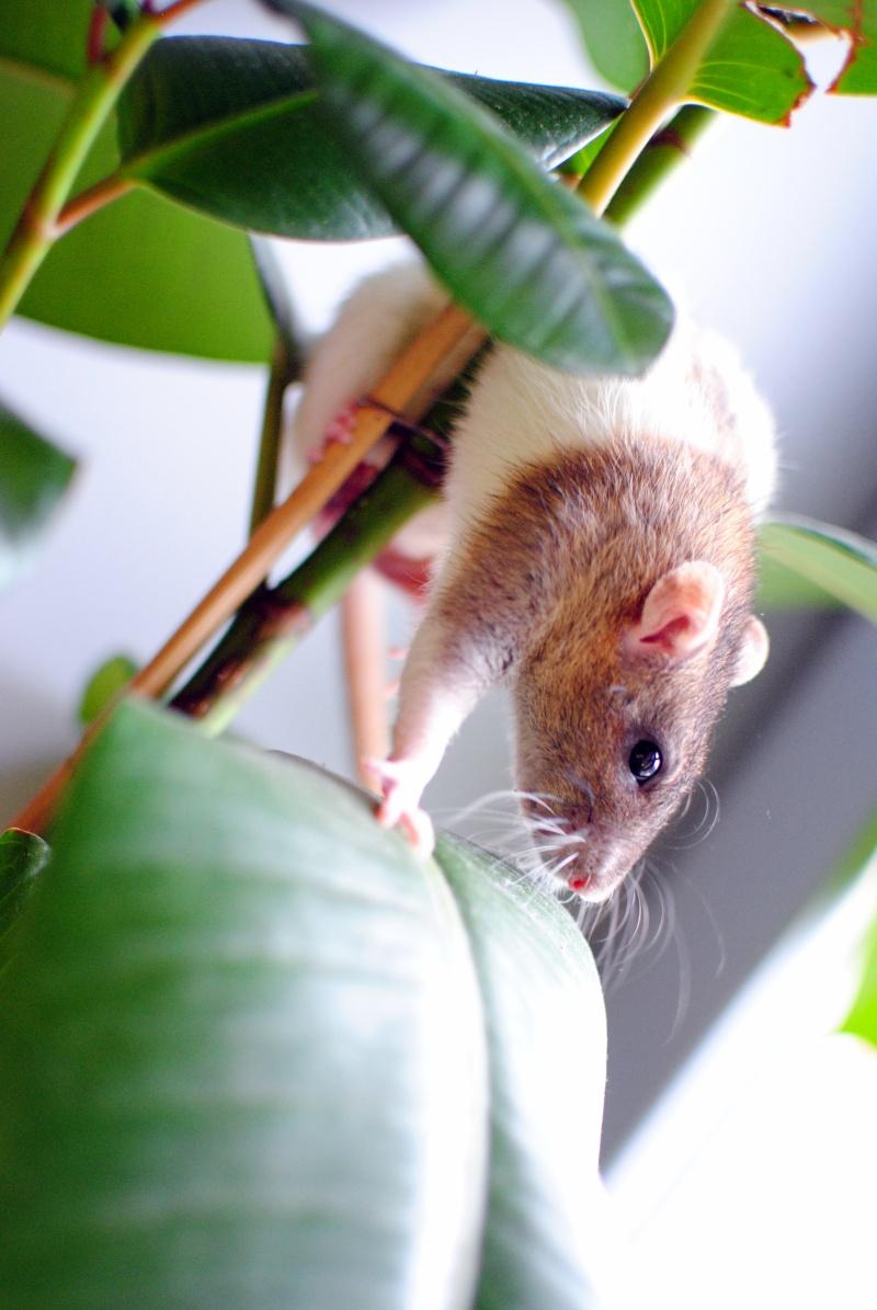 rat'clette et rat'violi  - Page 3 Dsc_0017