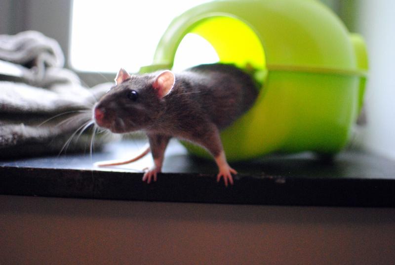 rat'clette et rat'violi  - Page 3 Dsc_0020