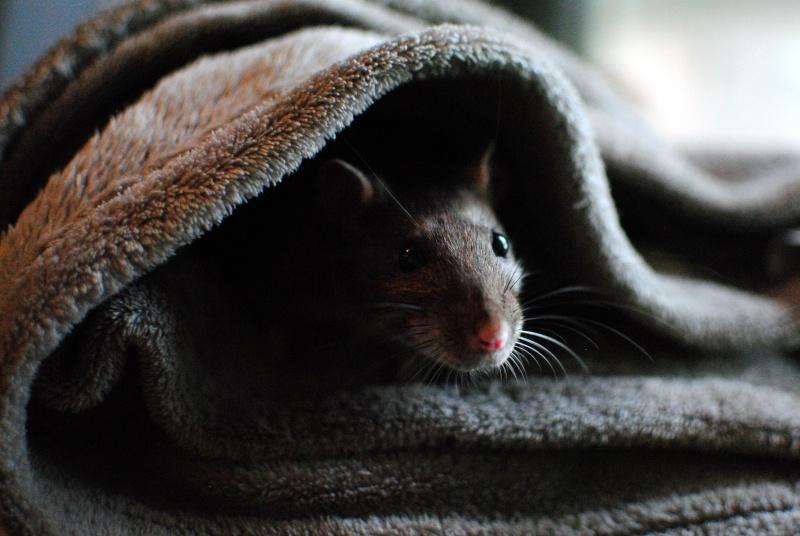 rat'clette et rat'violi  - Page 3 Dsc_0022