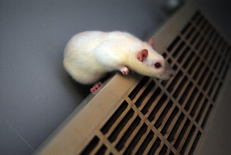 rat'clette et rat'violi  - Page 3 Dsc_0023