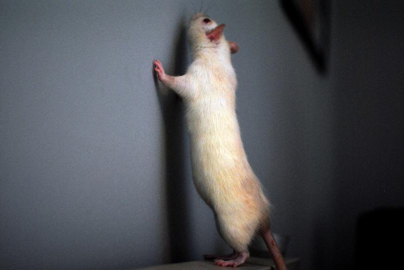 rat'clette et rat'violi  - Page 3 Dsc_0024