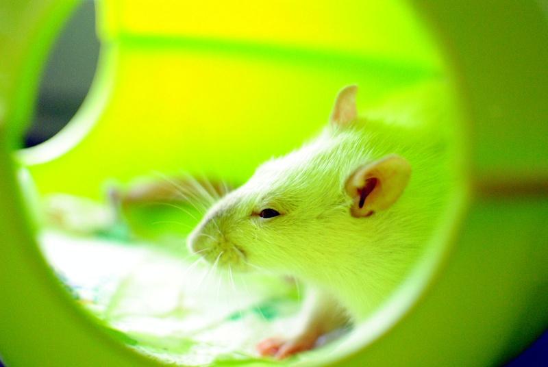 rat'clette et rat'violi  - Page 3 Dsc_0025