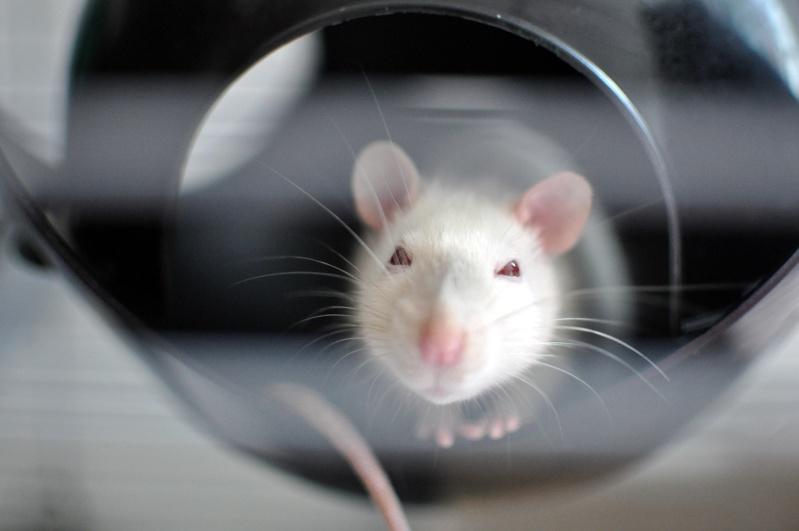 rat'clette et rat'violi  - Page 3 Dsc_0110