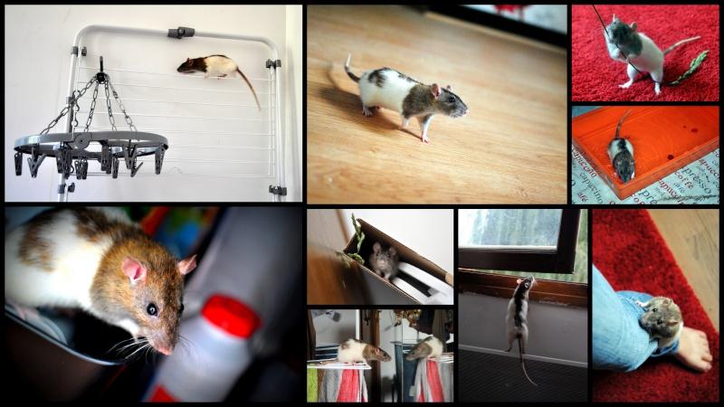 rat'clette et rat'violi  - Page 3 Rat_cl10