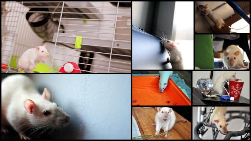 rat'clette et rat'violi  - Page 3 Rat_le10