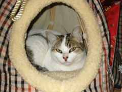 3 chats ont disparus entre le 14 et le 19/10 à Auterive 10703510