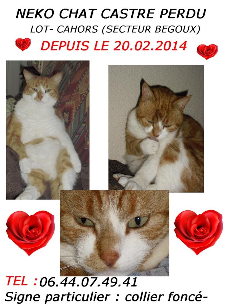 Perdu chat roux et blanc à Cahors (Bte hot) Affich10