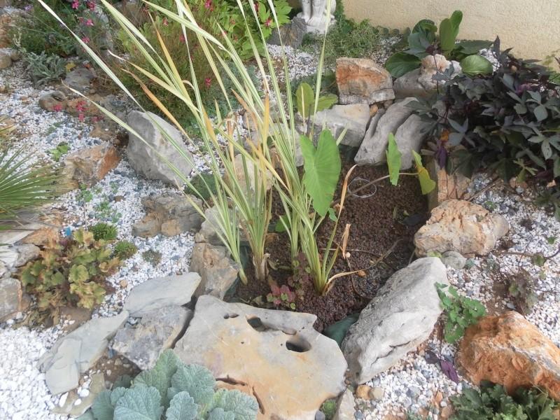 le jardin de syljou - Page 2 Sam_7814