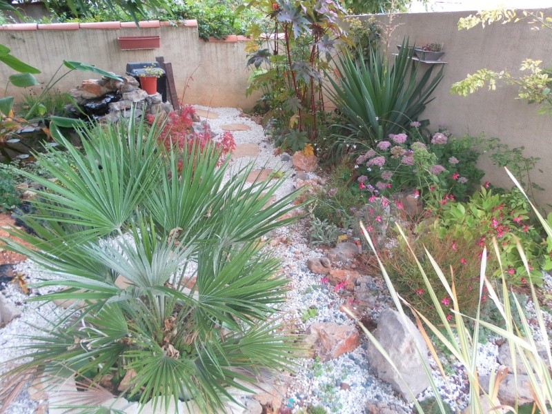 le jardin de syljou - Page 2 Sam_7815
