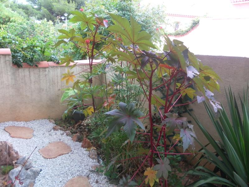le jardin de syljou - Page 2 Sam_7817